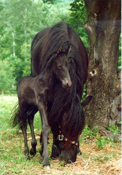 Whitney and one of her five foals